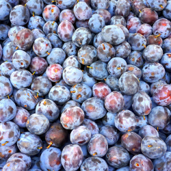 Prunes bleues - kg