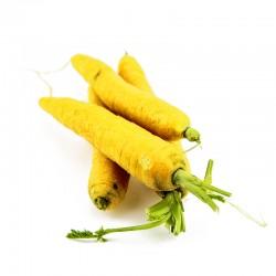 Carottes jaunes - filet de...